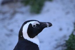 I love penguins. They are so cute!