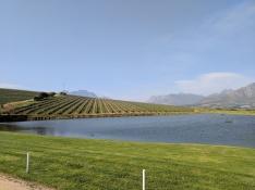 Stellenbosch wine country!