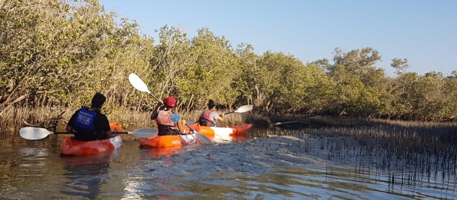 Kayaking in the Abu Dhabi mangroves